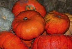 葡萄酒南瓜成熟菜特写镜头,橙色纹理背景 库存照片