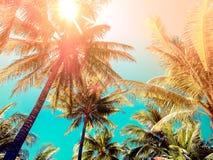 葡萄酒口气样式在海滩的椰子树 免版税库存照片