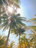 葡萄酒口气样式在海滩的椰子树 库存照片