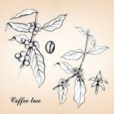 葡萄酒咖啡的被刻记的例证 库存图片