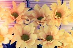 葡萄酒图象样式和选择聚焦在花花公子黄色flawer  库存照片