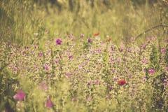 葡萄酒在太阳的被称呼的图象夏天野花 库存照片