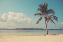 葡萄酒在热带海滩的被过滤的棕榈树 库存图片