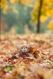 葡萄酒在秋叶的玩具熊 免版税图库摄影