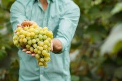 葡萄酒在酿酒商的手上 免版税图库摄影