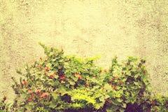 葡萄酒墙壁 免版税库存照片