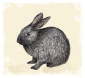 葡萄酒复活节与兔宝宝的贺卡。 免版税库存图片