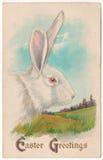 葡萄酒复活节问候白色兔子明信片 免版税库存照片