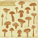 葡萄酒套不同的手拉的蘑菇 库存照片