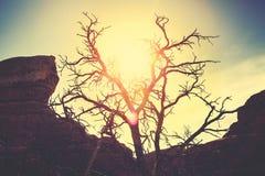 葡萄酒定了调子一棵偏僻的干燥树的剪影在日落 免版税库存图片