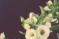 葡萄酒定了调子在黑背景的图象白花 库存照片