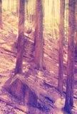 葡萄酒定了调子有太阳光芒的神奇森林 库存照片