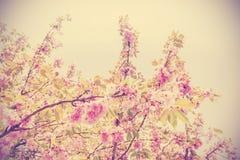 葡萄酒定了调子树的图片在开花的 免版税库存照片