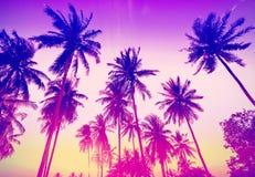 葡萄酒定了调子棕榈树剪影在日落 免版税图库摄影