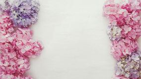 葡萄酒新鲜的八仙花属花卉背景 免版税库存照片