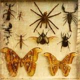 葡萄酒昆虫的样式图片 免版税库存照片