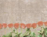 葡萄酒明信片标示用玫瑰色芽 免版税库存照片