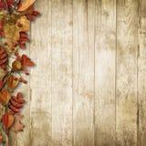葡萄酒木背景用秋天花揪和叶子 图库摄影