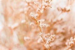 葡萄酒柔光口气和抽象自然软的焦点  免版税库存图片