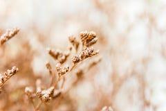 葡萄酒柔光口气和抽象自然软的焦点  库存图片