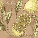 葡萄酒柠檬无缝的背景 免版税库存图片