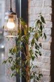 葡萄酒样式灯,点燃咖啡馆和植物的装饰 图库摄影