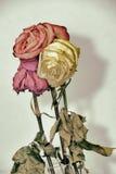 葡萄酒样式退了色三朵玫瑰色花 库存照片