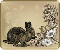 葡萄酒框架用兔子、开花的玫瑰和phlo 免版税库存图片