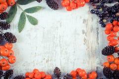 葡萄酒森林秋天果子照片、框架和文本的拷贝空间 免版税库存照片
