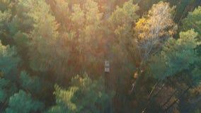 葡萄酒汽车鸟瞰图在森林里乘坐 影视素材