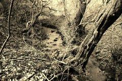 葡萄酒溪 库存图片