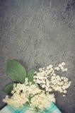 葡萄酒照片,接骨木浆果开花与在混凝土,文本的拷贝空间结构的叶子  库存图片