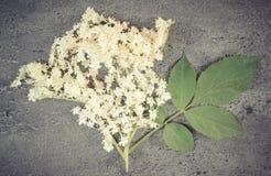 葡萄酒照片,接骨木浆果开花与在混凝土结构的叶子  库存照片