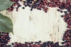 葡萄酒照片,秋天接骨木浆果框架与叶子,文本的拷贝空间的在老土气委员会 免版税库存照片