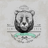 葡萄酒熊商标 免版税库存图片
