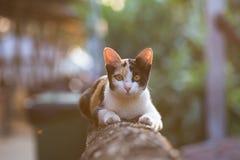 葡萄酒猫 库存图片