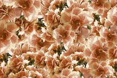 葡萄酒玫瑰红黄色棕色花 背景横幅开花表单少许桃红色螺旋 花卉拼贴画 背景构成旋花植物空白花的郁金香 库存图片