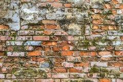 葡萄酒生苔砖墙纹理 库存照片