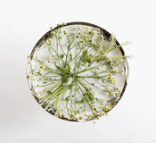 葡萄酒盘和花 顶上的视图 平的位置,顶视图 免版税库存照片