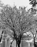 葡萄酒童话场面在Kyiv的中心拂去了灰尘与新鲜的雪 库存图片