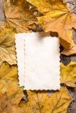 葡萄酒笔记的白纸卡片关于下落的叶子 库存照片