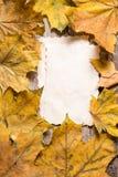 葡萄酒笔记的白纸卡片关于下落的叶子 库存图片