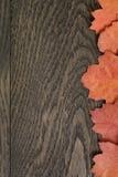 葡萄酒背景的被定调子的秋天橡木叶子 免版税库存图片