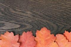 葡萄酒背景的被定调子的秋天橡木叶子 免版税图库摄影
