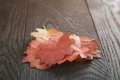葡萄酒背景的被定调子的秋天橡木叶子 图库摄影
