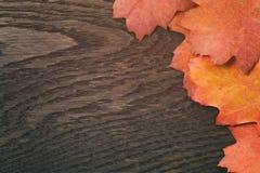 葡萄酒背景的被定调子的秋天橡木叶子 免版税库存照片