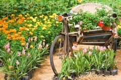 葡萄酒自行车三轮车。 图库摄影