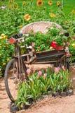 葡萄酒自行车三轮车。 免版税库存图片