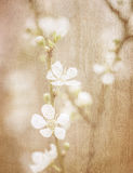 葡萄酒艺术花卉背景 免版税库存照片