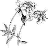 葡萄酒花卉构成 免版税图库摄影